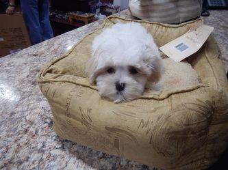 Yorkie Maltese Pomeranian Bulldog Rottweiler Boxer Pugs And