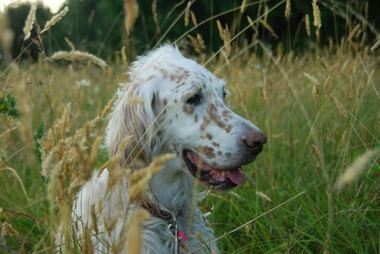 Hiking safety tips for dogs