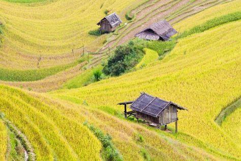 Mu Cang Chai - une région surprenante au Nord du Vietnam