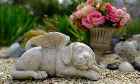 Welche Tiere Man Im Garten Begraben Darf Tiere Haustiere Thema