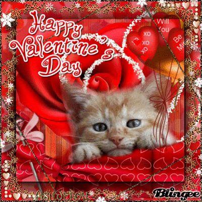 Valentine Cat Picture 127894218 Blingee Com Valentines Day Cat Funny Cat Videos Cat Valentine