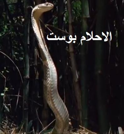 تفسير الثعبان الحية في الحلم بالتفصيل لكل حلم الاحلام بوست Snake