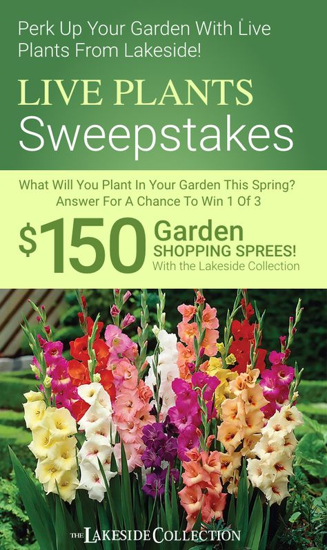 Get a chance to win 1 of 3 $150 Lakeside shopping sprees to create your own beautiful landscape just by answering this question: What Will You Plant In Your Garden This Spring? It's that easy! Enter now at