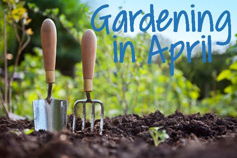 Looking for some great plants to start growing in April? Check it out!