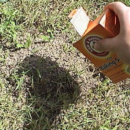 How To Get Rid Of Ant Hills Top 10 Best Ways To Destroy An Ant