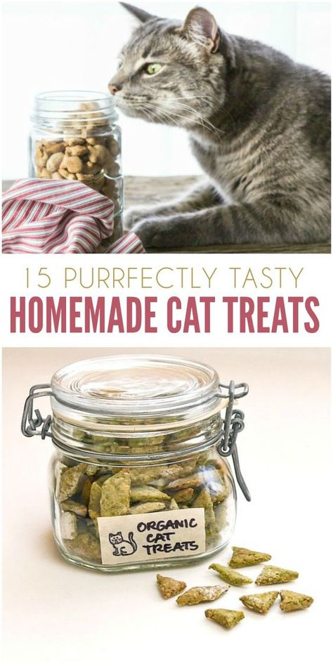 If you have a cat, you know how irresistible it is to pamper them. From toys to treats, it seems we're always looking for something to spoil them with. Why not make your favorite feline a few of these homemade cat treats? You'll find crunchy snacks, chewy Cat Recipes, Dog Food Recipes, Homemade Cat Food, Homemade Baby, Organic Homemade, Pet Treats, Kitten Treats, Healthy Cat Treats, Snacks