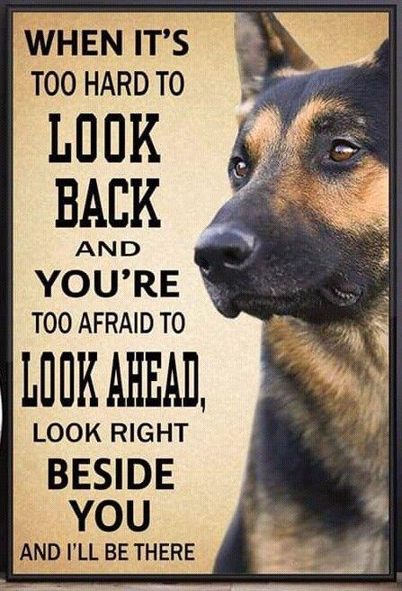 Fleece Blanket Rottweiler When It/'s Too Hard To Look Back Look Beside  Quilt