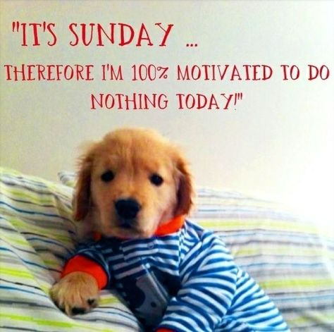 Hahaha My Sentiments Exactly Golden Retriever Puppy Cute