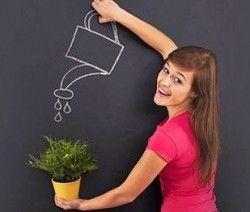 Comment Bien Arroser Les Plantes Avec Images Arroser Plante