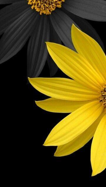 Yellow Flower Wallpaper Hd For Mobile Di 2020 Dengan Gambar
