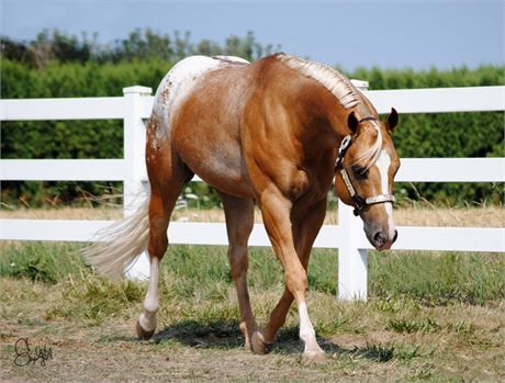 Pin On Equine Color References