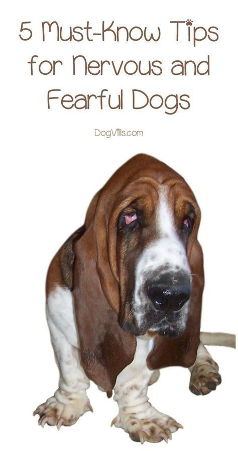 5 Must Know Tips For Nervous And Fearful Dogs Dog Behavior Dog