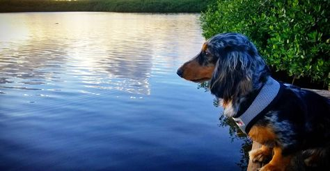 dogsofinstagram #summerpastor #dogpictures...