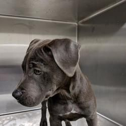 Posted 5 27 19 Scared And Needing A Forever Home Asap Fort