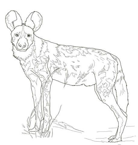 Wildhunde Ausmalbilder Ausmalbilder Wildhunde Wild Dogs Dog