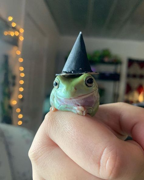 Cute Little Animals, Cute Funny Animals, Sapo Frog, Pet Frogs, Frog Pictures, Funny Animal Pictures, Cute Reptiles, Frog Art, Frog And Toad