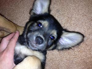 Adopt Summer On Adoptable Beagle Beagle Dog Dog Friends