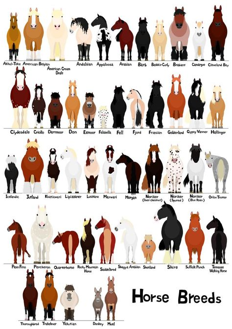 Horse svg, jpg, 16 x 20 inch /various breeds of horses chart svg, jpg, Funny Horses, Cute Horses, Pretty Horses, Beautiful Horses, Animals Beautiful, Cute Animals, Baby Horses, Different Horse Breeds, Types Of Horses