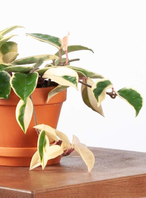 Pin On Houseplants Tips And Tricks