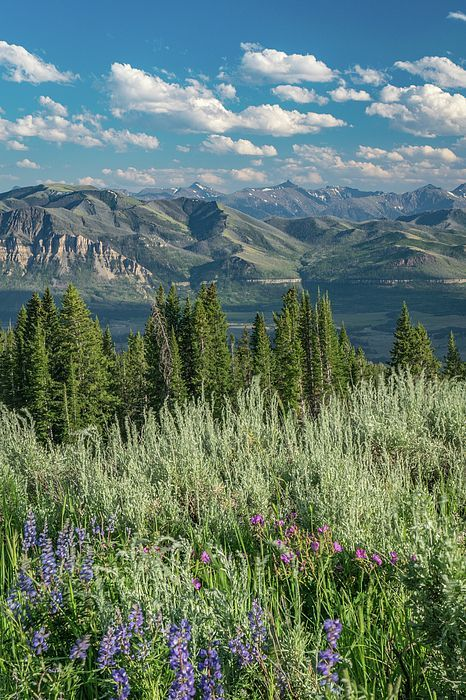 High Country Spring By Aaron Geraud With Images Landscape Photography Nature Spring Landscape Photography Nature Photography