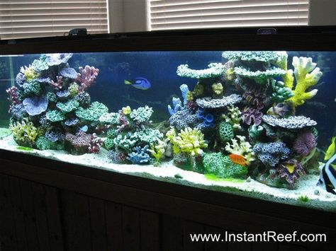 Have a saltwater tank with seahorses, starfish, shrimp, crab & clownfish.