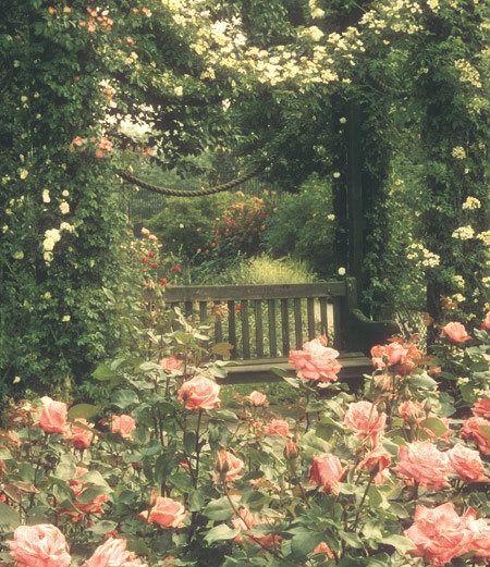 Schöner Rosengarten garden Rosa pergola by seat, Regents Park, London, UK Cottage Rose, Garden Cottage, The Secret Garden, Secret Gardens, Beautiful Gardens, Beautiful Flowers, Beautiful Places, Pretty Roses, Regents Park London