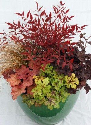 Heuchera Idealnie Nadaje Sie Do Kompozycji Tarasowych Fall Container Gardens Container Flowers Container Plants