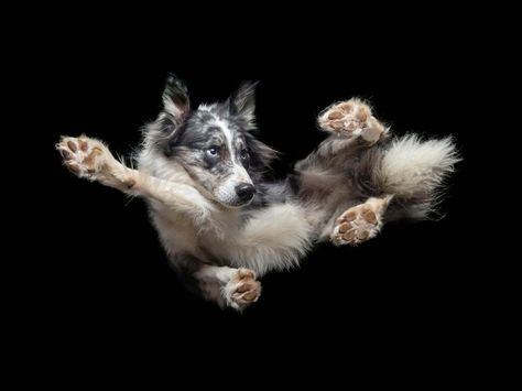 Dogs fly through the air and strike a pose in hilarious photos