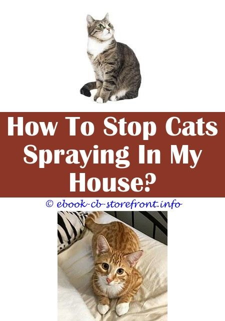 10 Well Hacks Can Spayed Female Cats Spray Do Female Cats Spray
