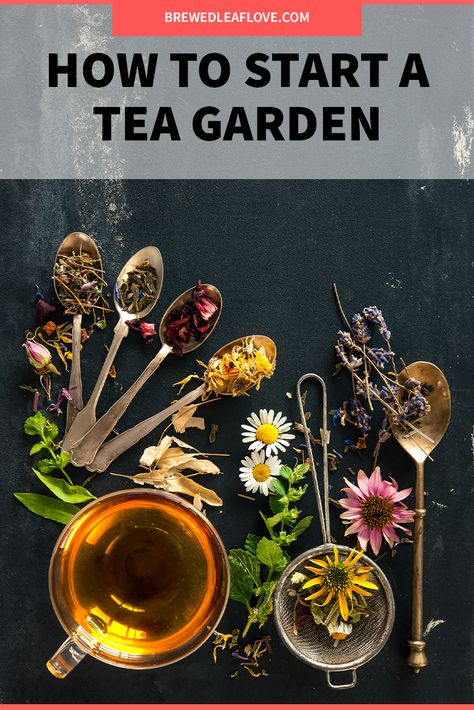 Which herbs should you plant to grow your own herbal teas in your own herbal tea garden? What plants grow easily and make the best herbal teas. Herbal Tea Benefits, Best Herbal Tea, Best Tea, Herbal Teas, Making Herbal Tea, Organic Herbal Tea, Herbal Plants, Medicinal Plants, Homemade Tea