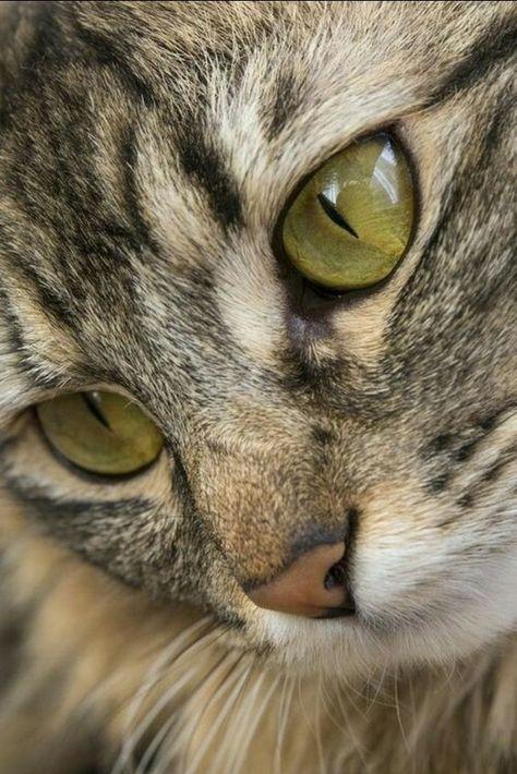 Amour de chat 😺 chats calin -      Chats et chatons- chaton mignon -bébé chat- beaux chats- chat trop mignon #chatjadore     #chats #animauxdecompagnie #chatons #chaton   #felin  #miaou #leschats #chat #animaux #shopping  #boutique #objetchat #articlechat  #followforfollow  #cat #beautiful #bébéchat #bébénanimaux #amourdechat