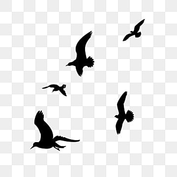 Black Bird Flying Silhouette Bird Fly Silhouette Png Transparent Clipart Image And Psd File For Free Download In 2021 Flying Bird Silhouette Birds Flying Black Bird