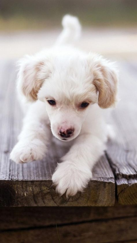 Cute Puppy Wallpaper Iphone Android Desktop Backgrounds