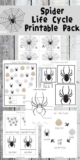 Free Spider Life Cycle Worksheets Life Cycles Spider Theme Preschool The Very Busy Spider