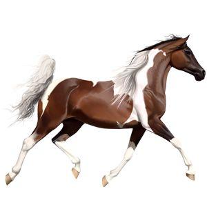 Rhapsody, Pferd Paint Horse Fuchs mit Tobiano-Scheckung #748 - Howrse