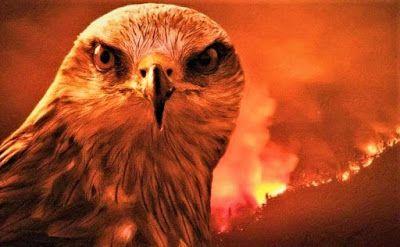 الطائر الذي أمر الرسول صل الله عليه وسلم بقتله أينما وجد Animals Blog Bird
