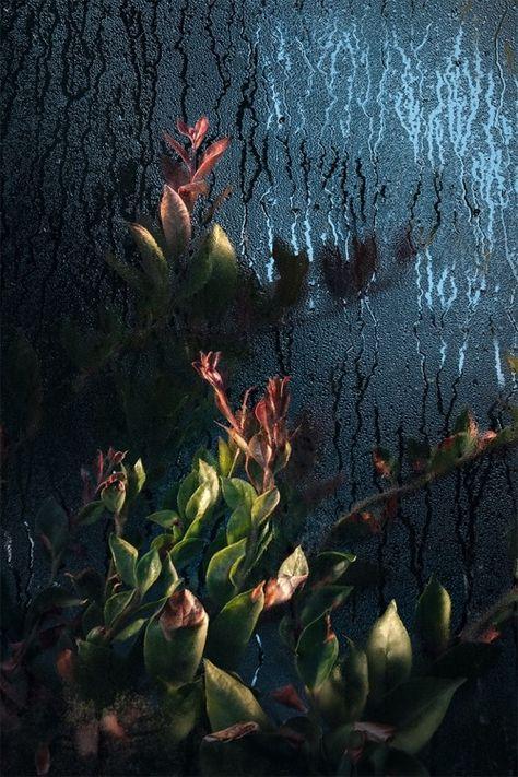 SAMUEL ZELLER, Botanical Garden, Genf, Switzerland, 2016 - #architectural #architecture #arquilovers #arquitecto #arquitectos #arquitectura #arquitecturephotography #arquiteturadeinteriores #atlas #beauty #design #falling #florist #flower #flowers #interior #interiors #light #lights #of #photographe #photography #vintage #water #world