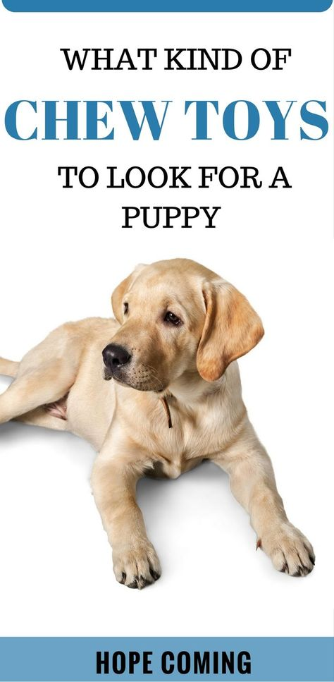 What Kind Of Chew Toys To Look For A Puppy Interactive Dog Toys