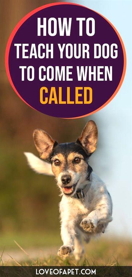 Dog Training App Obedience Dog Training Near Me Zoom Room Dog