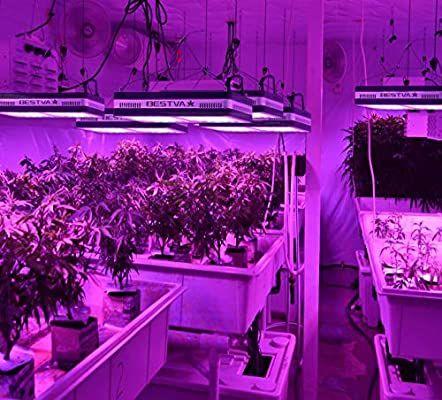 Bestva Samsum Series 1200w Cob Led Grow, Outdoor Grow Lights