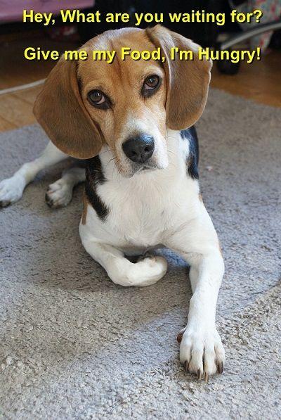 Pin By Ross Wilson On Megajewelstore Com Beagle Dog Beagle