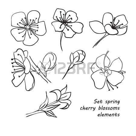 Stock Photo Fleur De Cerisier Fleur De Cerisier Dessin Et Dessin Main