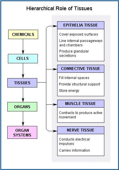 24 Science Apologia Advanced Biology Ideas Anatomy And Physiology Biology Physiology