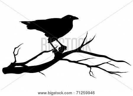 Raven Bird On Tree Branch Black Vector Silhouette On White Poster Id 71259946 Bird Silhouette Silhouette Art Bird Silhouette Art