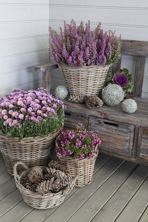 Potted Mums, Unique Garden, Best Front Doors, Decoration Entree, Flower Decoration, Garden Decorations, Pot Jardin, Home Landscaping, Rustic Landscaping