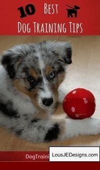 Dog Training Tips For Rescue And Pics Of How To Train A Dog To