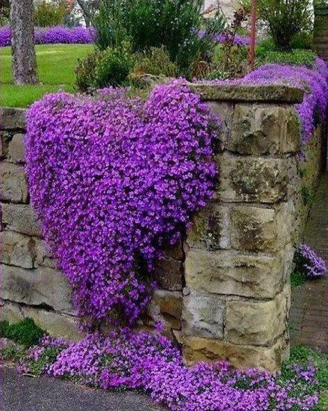 Pianta Fiori Viola.Mi Piace 682 Commenti 10 Larisa Larisa Skrebkova Su