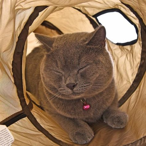 Sleek Cat Tunnel Cat Tunnel Cats Cat Playing
