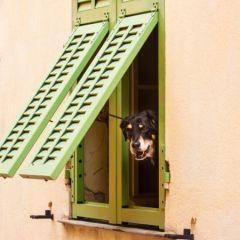 Home-sitting et garde d'animaux : Agence spécialisée ou Plateforme, quelle différence ?