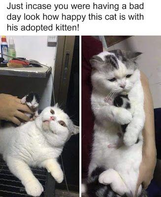 New Best Funny Memes 2019 Cute Animals Cute Baby Animals Cat Memes
